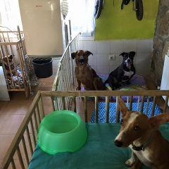 Ayer les pusimos a los perris el aire acondicionado.