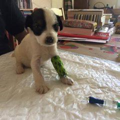 Olivia, la cachorrita que quedaba viva de la camada con la mama que sacamos el jueves murió anoche.