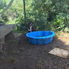 Comenzamos temporada acuática con piscinas pequeñas y grandes. Les encanta meterse y jugar en las pequeñas.