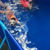 Como ayer vinieron refuerzos pudimos meter a mas de nuestros chicos a nadar en la piscina.
