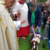 Como cada año, para celebrar mi cumpleaños, vamos a recibir la bendición de San Anton y a comprar sus panecillos.