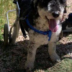 Esta mañana venían tres familias a ver sillas para sus perris y llevarse alguna.