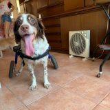 Hace unas semanas nos pidieron una silla para un perrin especial.