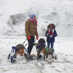 Ayer nos subimos a Navacerrada con los perris. Nevaba mucho y estaba todo precioso.