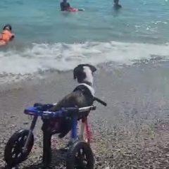 MAGDALENA se tira al agua con silla y todo.