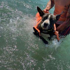 Ya sé que soy una plasta, pero es que disfrutaron tanto en el agua que no me canso de verles.